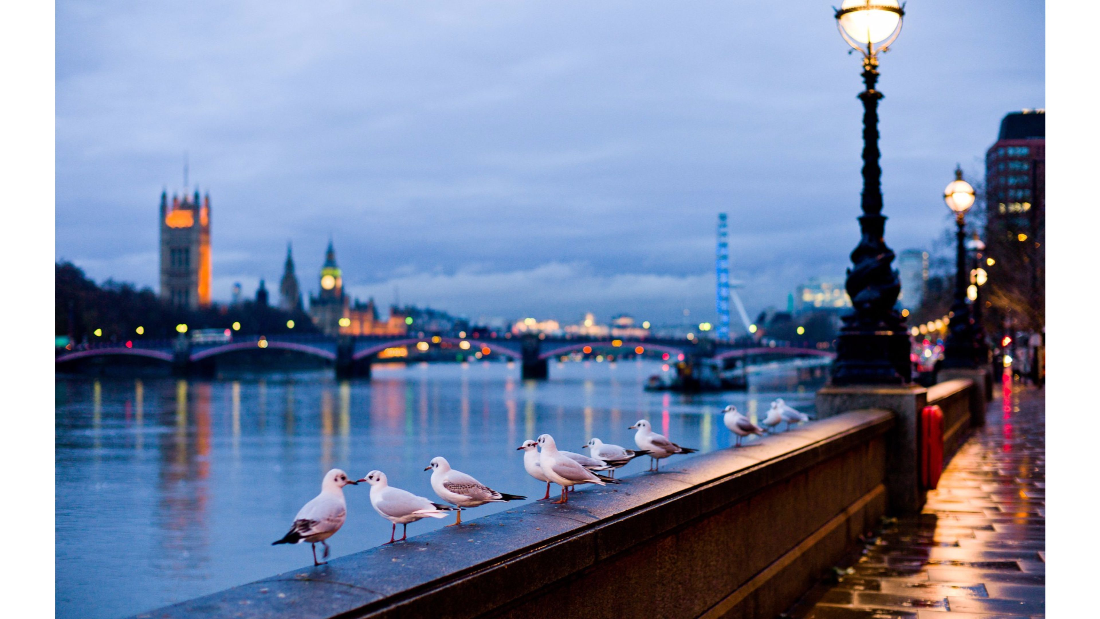 Cute Face Girl Wallpapers For Mobile Birds Love On Thames River London Hd Images