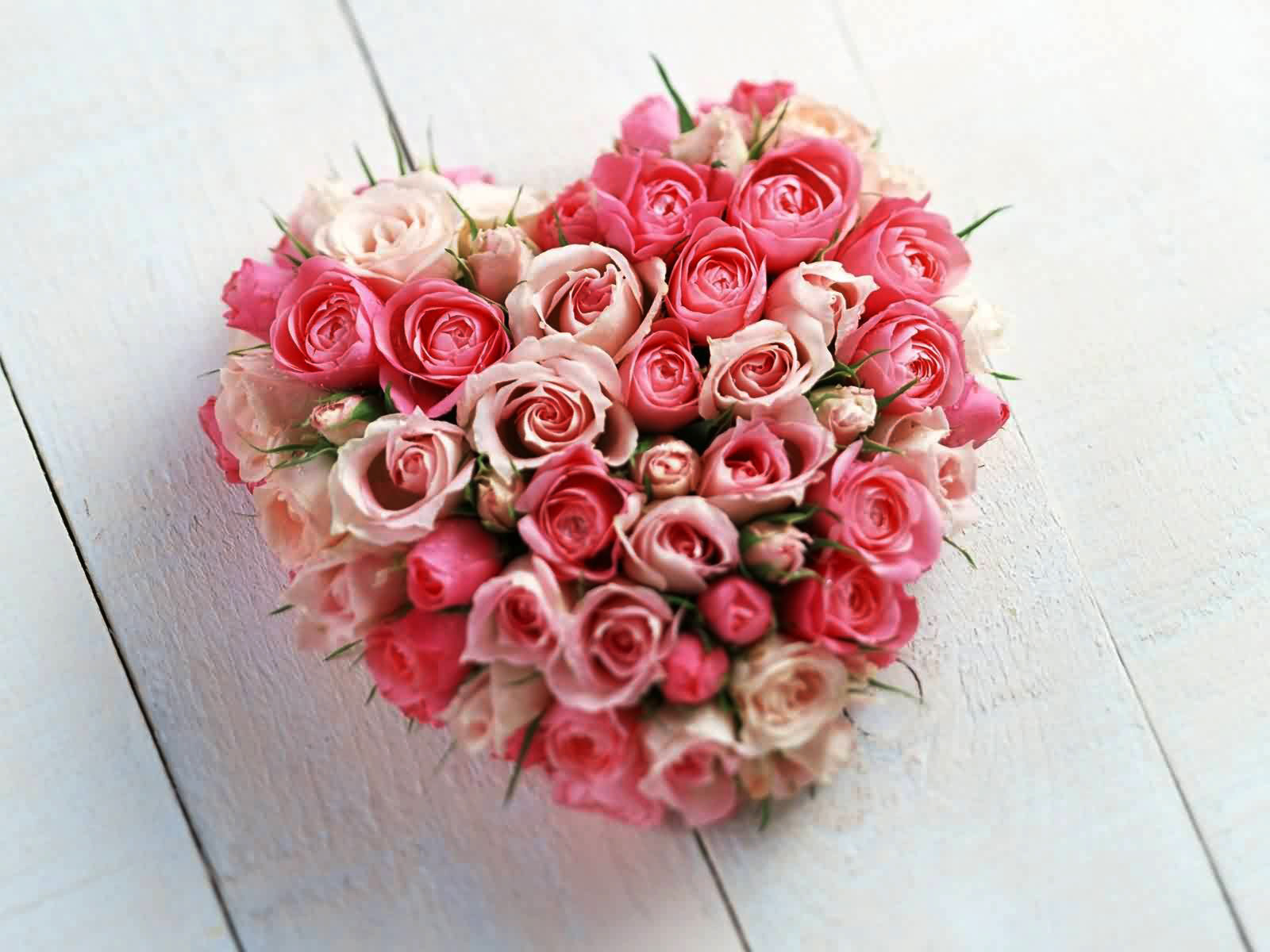 love rose flowers