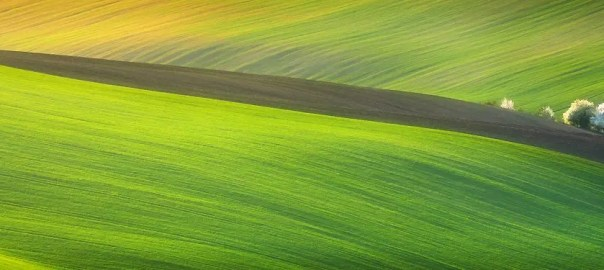 awesome green yellow grass field aerial background