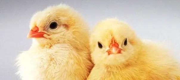 farm animal background farm