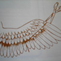 Clipping Duck Wings Diagram Wiring For 1985 Chevy Truck If You Wish To Clip Your Birds Then Do So With Great