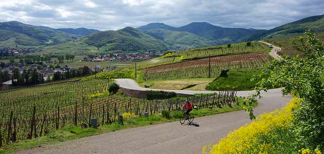 Image result for alsace wine route images