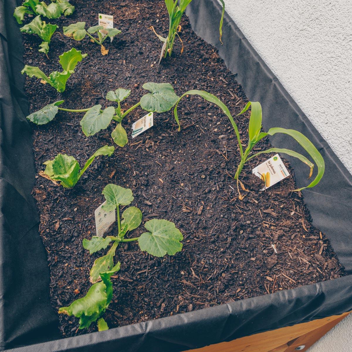 Hochbeet bepflanzen