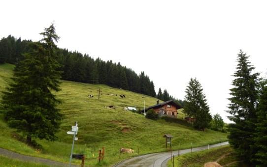 Alperlebnispfad am Imberg im Allgäu