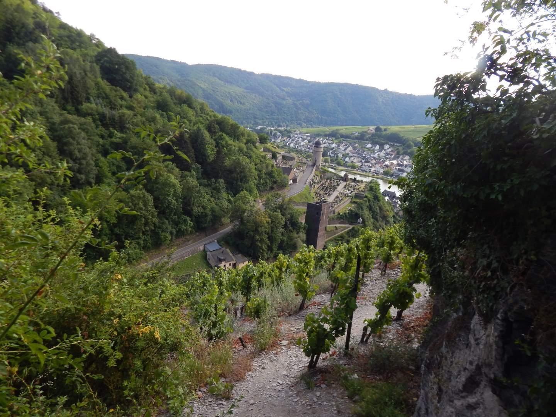 Klettersteig Mosel : Collis steilpfad mit klettersteig über zell an der mosel freiweg
