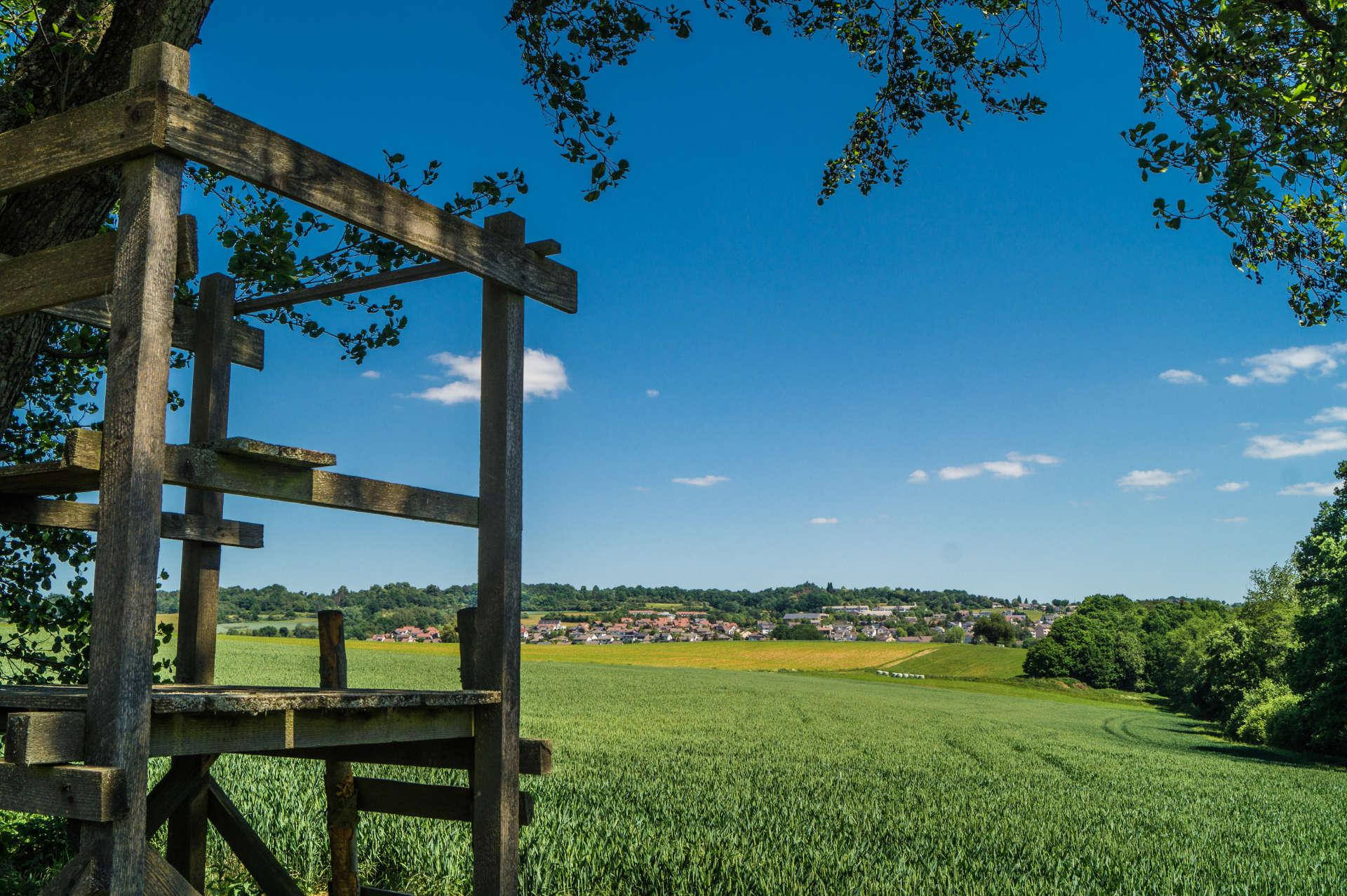 Wandern auf der Schächerbachtour im Vogelsberg