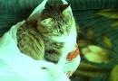 """""""Schwarz-grüne Katze in rot-grünem Sack"""""""