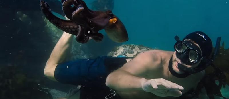 My Octopus Teacher y el arte de reencontrarse a uno mismo | Freim TV