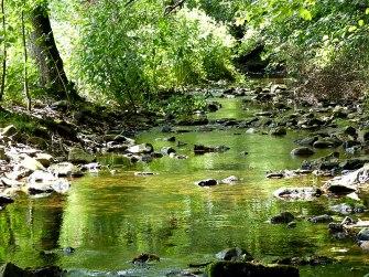 Ausflugsziel Tharandter Wald