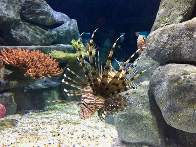 fpm_aquario_peixe2