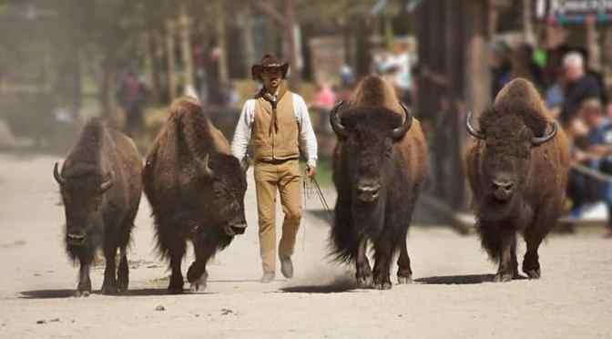 Riesige Tier-News aus dem Zoo Safaripark