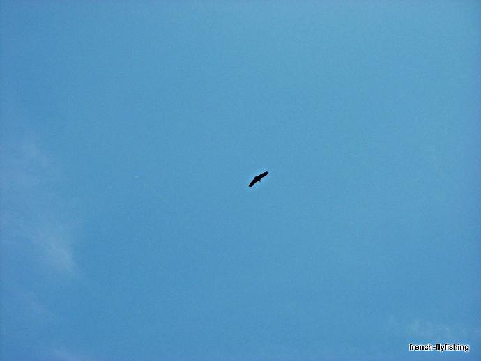 vautour pays basque
