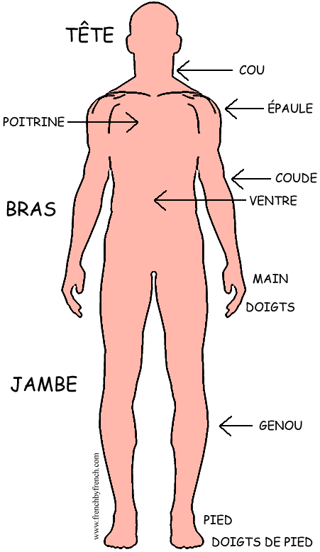 The Human Body French Vocabulary