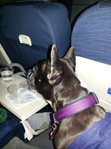Kichi Heading to America