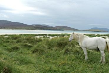 horse luskentyre harris
