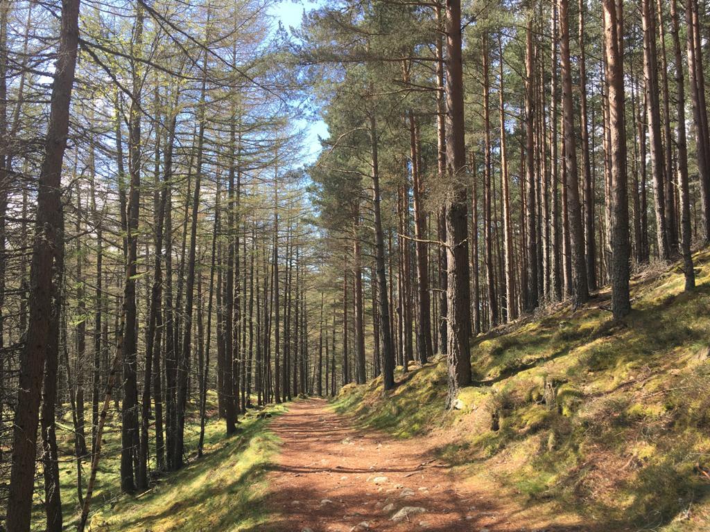 Queen's Drive walk a Braemar