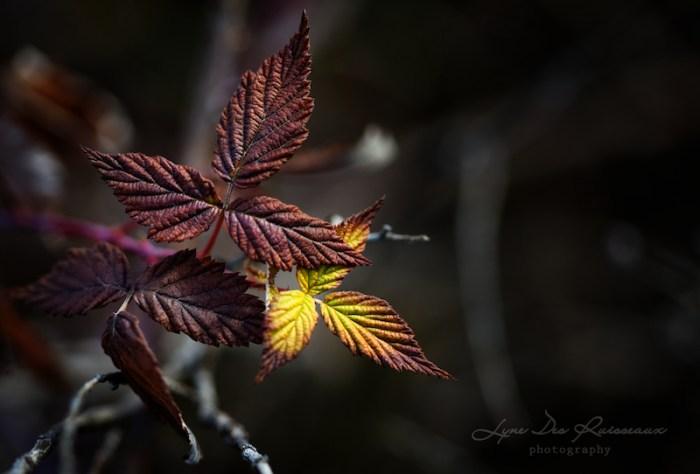 Quelques feuilles survivent à l'automne...