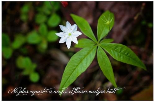 Ne plus repartir à neuf... et fleurir malgré tout!