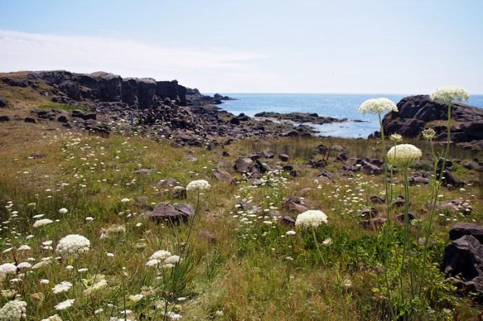 Brier Island