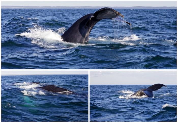 baleines-2