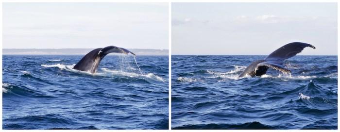 baleines-3