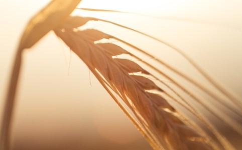 Régime sans gluten : comment réduire sa facture