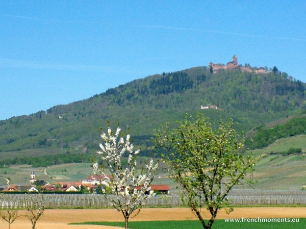 séjour printanier en Alsace : le Haut-Kœnigsbourg vu des alentours de Saint-Hippolyte © French Moments