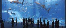 Oceanographic Museum Of Monaco French Riviera