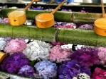 Kyoto : Les hortensias du temple Yokokuji - Yanagidani Kannon 陽谷寺・柳谷観音寺