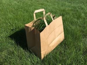 Graspapier als nachhaltigere Verpackungsalternative