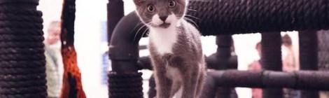 Fresh News: Here, Kitty Kitty