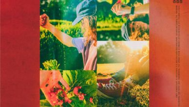 FELLY - WILD STRAWBERRIES