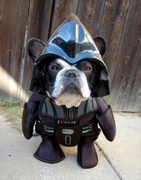 50 Absolutely Amazing Dog Costume Ideas