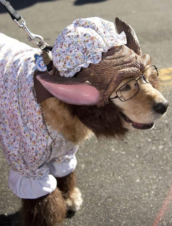 50 Absolutely Amazing Dog Costume Ideas