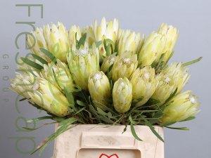 FreshCap Protea Repens White