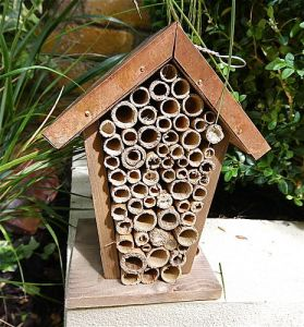 Create a bee friendly garden