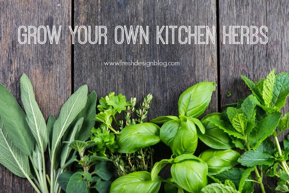 Fresh design guide growing kitchen herbs fresh design blog for Fresh design blog