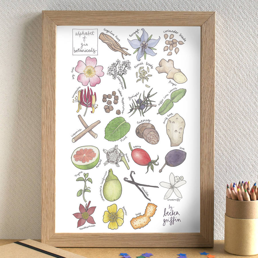 Beautifully hand drawn gin botanicals illustration by Becka Griffin Illustrations - perfect for all gin lovers