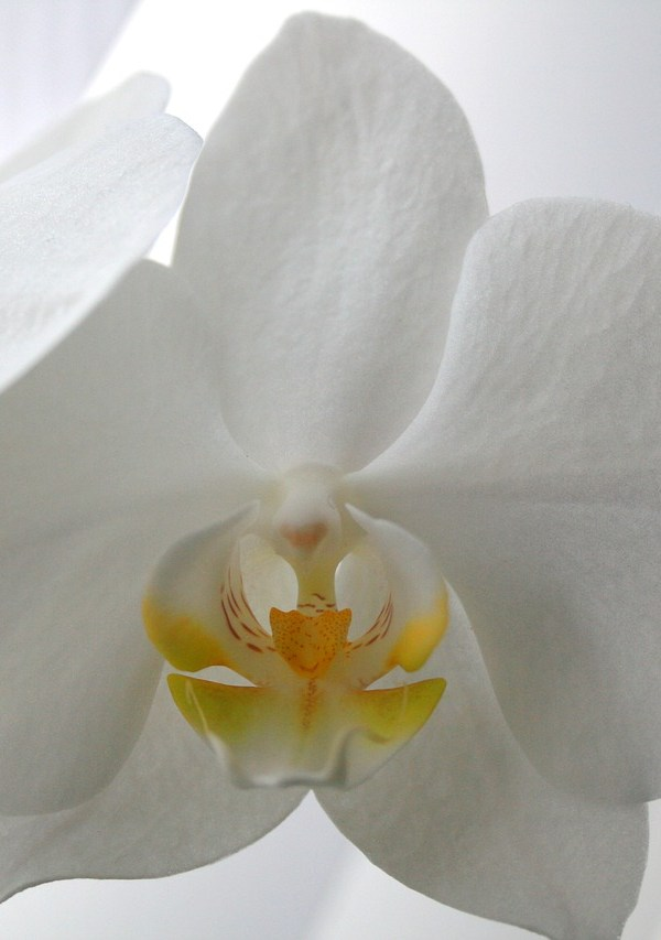 All about orchids – your guide to interior design's most versatile plant