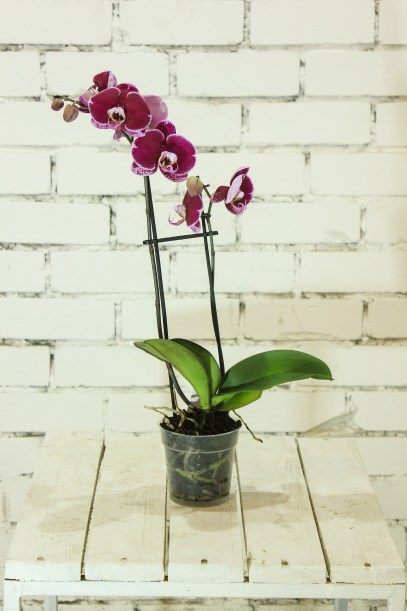 Discover how to care for and style orchids in your home