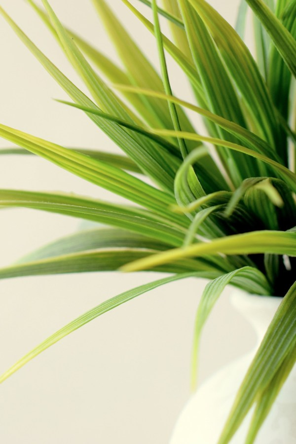 Green up your living space with indoor plants
