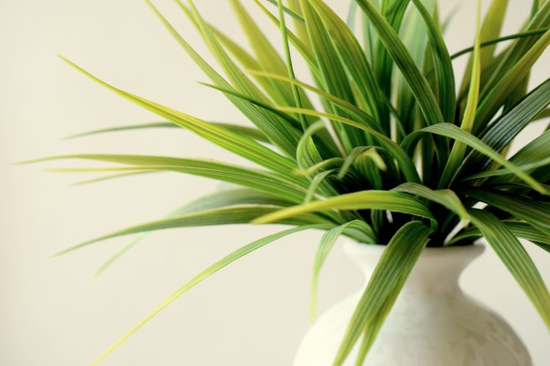 Indoor plants not only look good in your interior, but they also help purify the air too