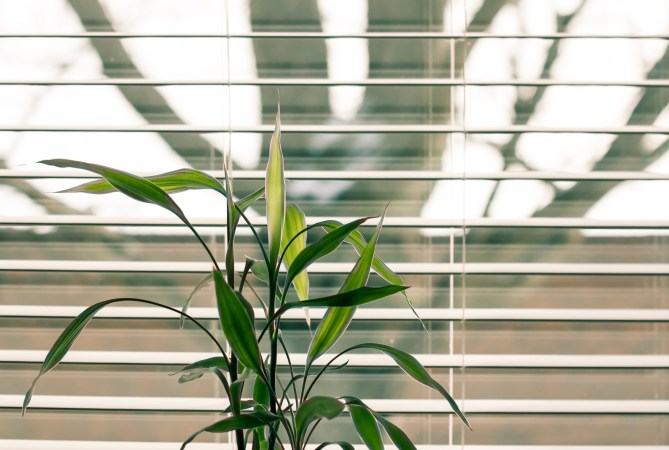 Textured or patterned blinds are useful for conservatory windows