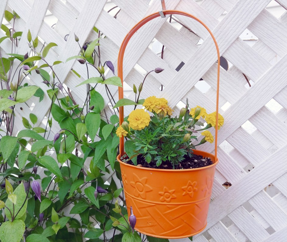 Hang pretty plant pots from your fence to brighten it up