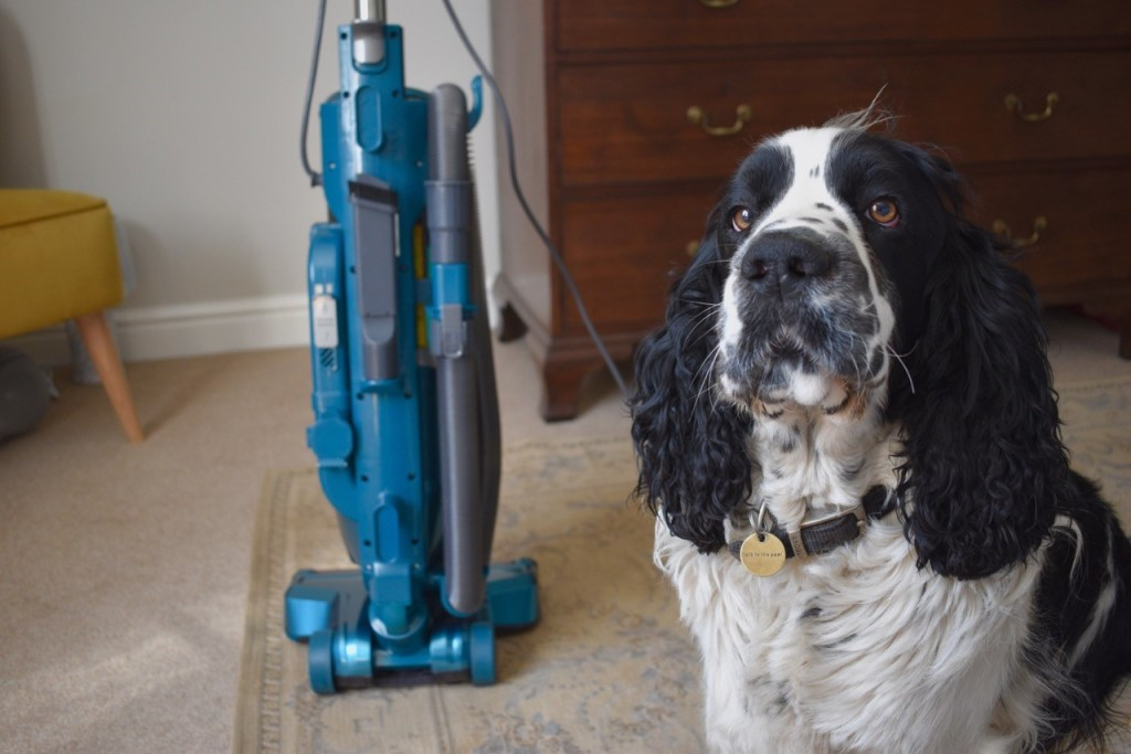H-UPRIGHT 500 Reach vacuum cleaner from Hoover