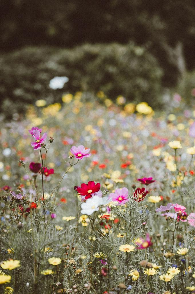 Go natural and create a wildflower area in your garden