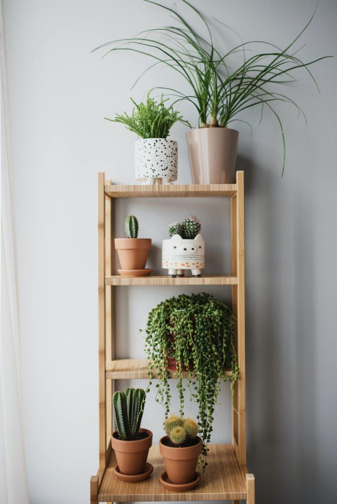 Fresh green plants are a great addition to the inside of your home