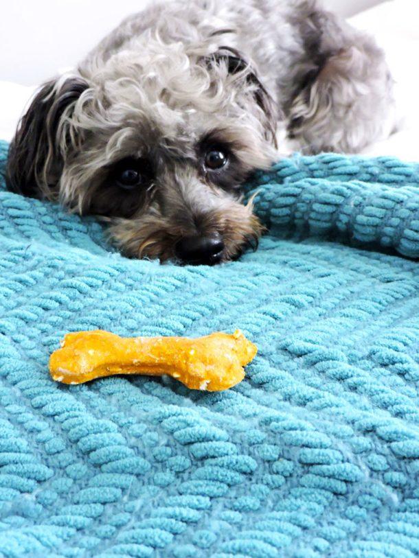 3 Ingredient Pumpkin Pup Treats