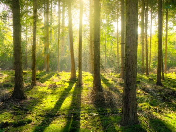 The mental health benefits of nature