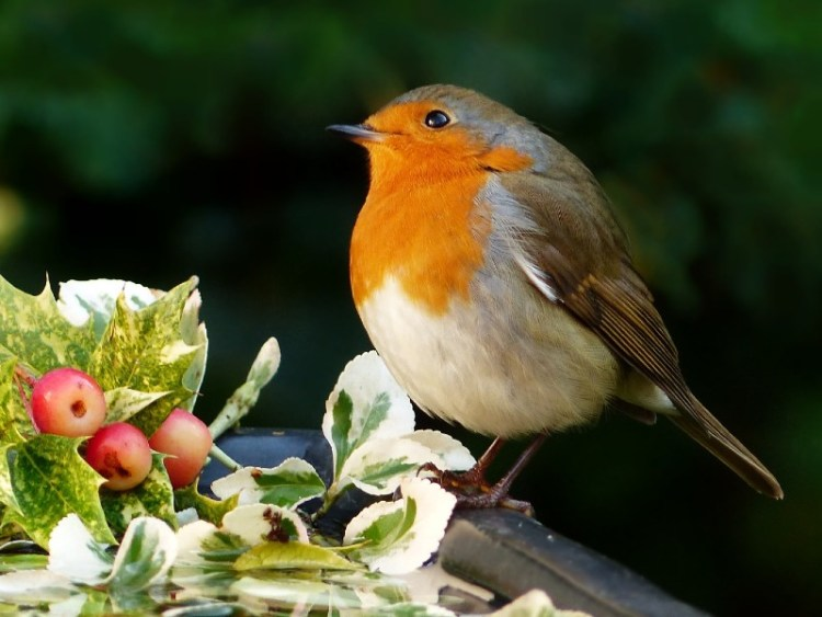 Why buy a bird table? Read on for many wonderful reasons why you should.